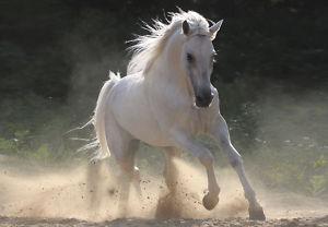 cavallona1