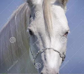 Cavalloneide - canto sesto